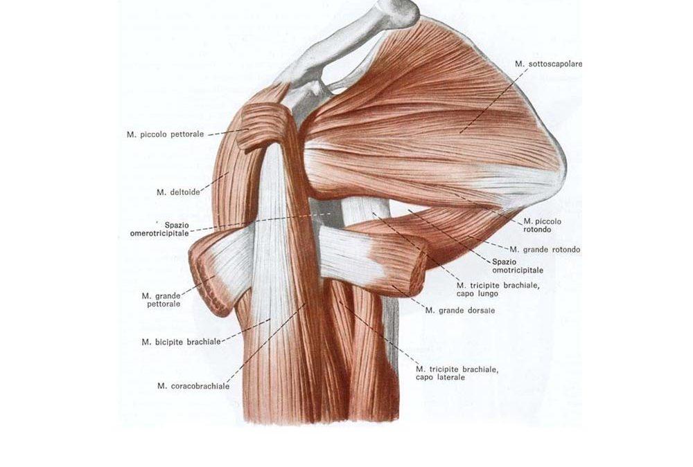 La fisioterapia nella cura delle tendinopatie e delle lesioni della spalla